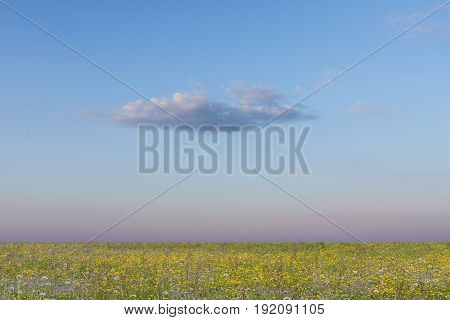 Colorful summer meadows, buttercups and a lonely cloud. Afternoon on the plain.