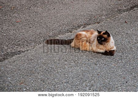 Cat on street of Saint-Gervais-Les-Bains/Le Fayet in France