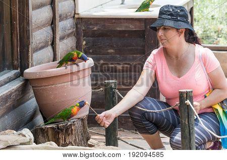 Young woman feeds parrots at the Australian Zoo Gan Guru in Kibbutz Nir David in Israel