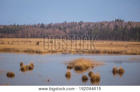 A Beautiful Landscape Of A Lake With Reeds Where Migratory Birds Can Rest In An Early Spring