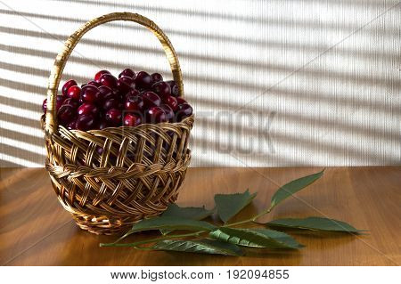 Berries of red juicy and sweet cherries in a basket on the morning table