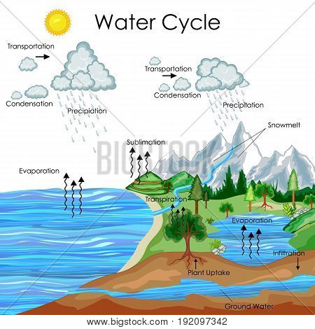 poster of Education Chart of Biology for Water Cycle Diagram. Vector illustration