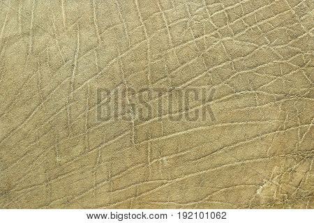 closeup of african elephant skin texture of real leather ( Loxodonta adaurora )