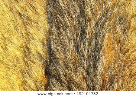 detail of eurasian lynx leather ready for your design closeup of textured pattern of animal skin