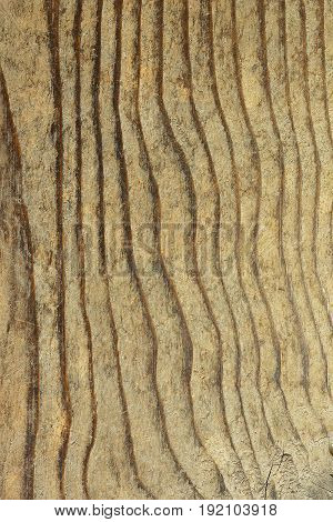 texture of fir plank wooden pattern for your design