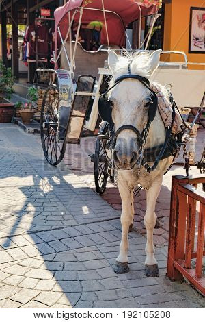 Langkawi, Malaysia - February 16, 2016: The pony for carrying the wagon at Oriental Village of Langkawi, Malaysia. Attractions for tourists.