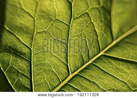 Green macro leaf whit veins, closeup and macro photography