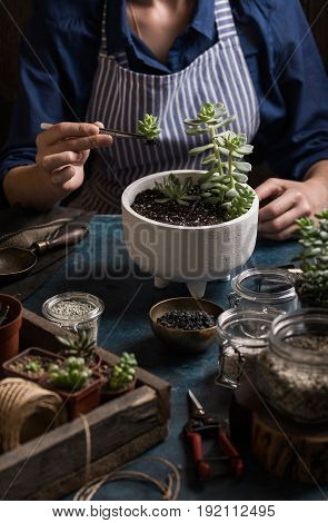 Succulents mini garden making step by step. Story in dark colors