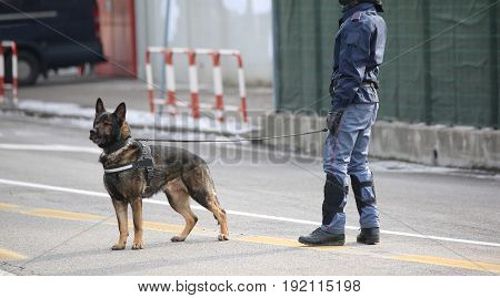 Dog Canine Unit Of The Police During The Inspection Of The Area