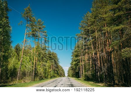 Asphalt Country Open Road Through Spring Trees Woods Coniferous Forest In Sunny Day. Summer Forest Landscape In Belarus Or European Part Of Russia