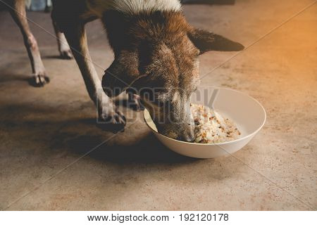 Hungry dog is feeding at home. Close up of dog eating from the bowl.