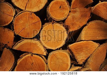 logs in a pile with the ends showing in a black background