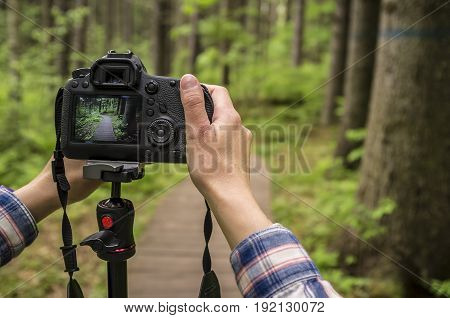 Photographer takes pictures of summer forest on the DSLR camera that stands on a tripod.