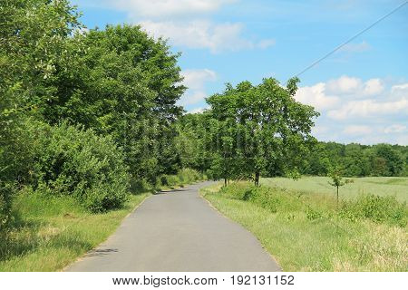 narrow road and green trees around it in summer