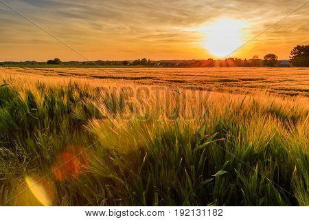 Colorful sunset over wheat field with lensflare. Kortenaken Flanders Belgium