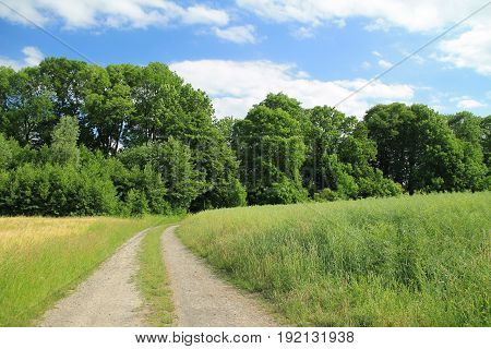 path leading between the fields to the forest in summer