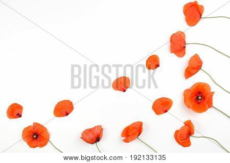 Red poppies frame on white background. Top view, flat lay