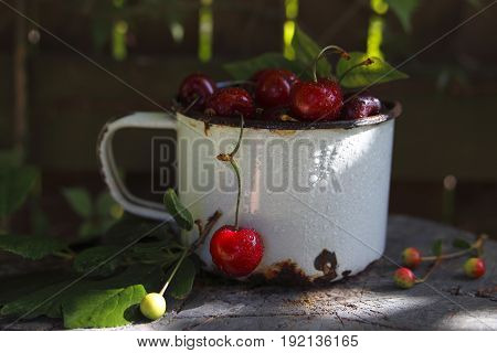 ripe cherries in an enamel mug in the garden