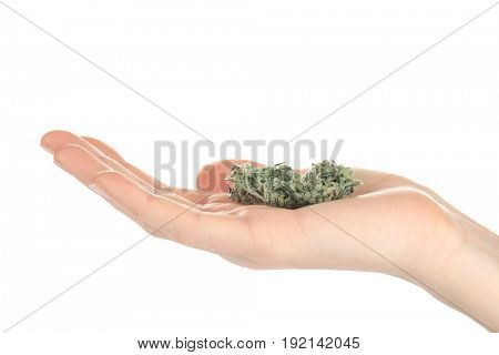 Woman holding weed bud isolated on white