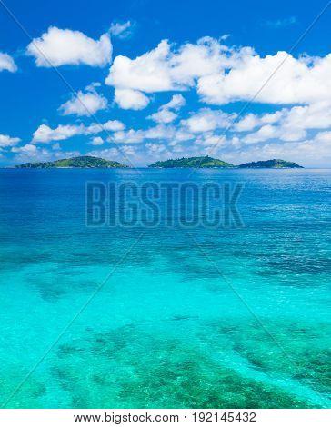 Jungle Summertime Sea