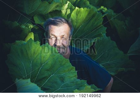 An elderly man hides in a burdock foliage