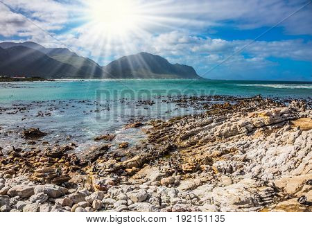 The bright sun illuminates the stony shore with algae. Boulders Penguin Colony National Park of the Atlantic, South Africa. The concept of  ecotourism
