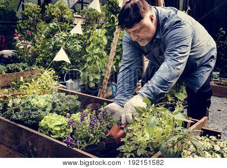 Senior adult planting vegetable from backyard garden
