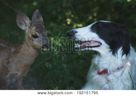 Curious dog and roe deer fawn outdoor