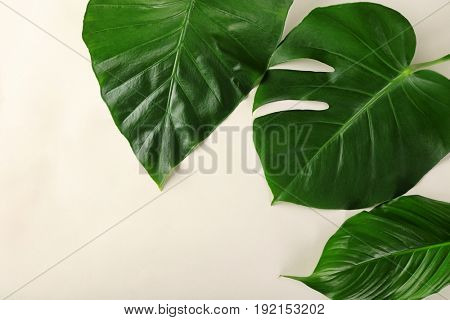 Green tropical leaves on light background