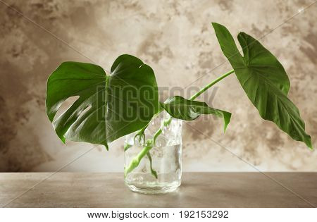 Vase with green tropical leaves on table against color background