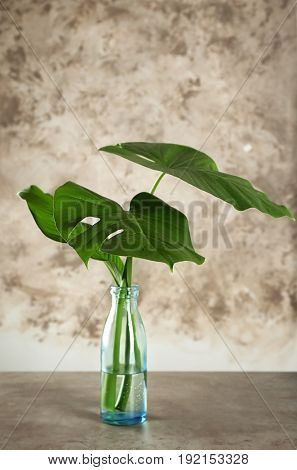 Bottle with green tropical leaves on table against color background