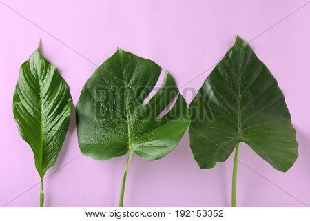 Green tropical leaves on color background