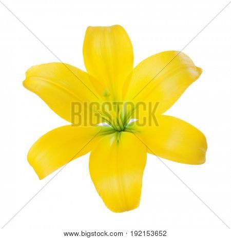 Close-up of a yellow lily flower isolated on a white background.