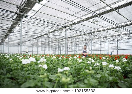 Image of handsome young man standing in greenhouse near plants. Looking aside.