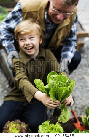 Little Boy Hands Holding Fresh Vegetable From Farm