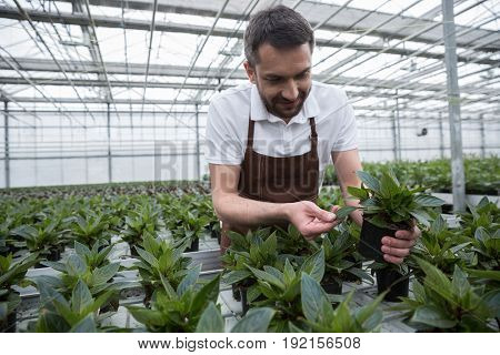 Photo of young happy man standing in greenhouse near plants. Looking aside.