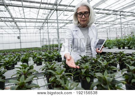 Picture of concentrated mature woman standing in greenhouse near plants holding tablet computer. Looking aside.