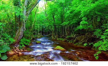 Fast mountain river flowing among mossy stones and boulders in green forest. Carpathians