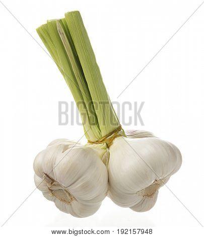 Fresh garlic bulb isolated on white background.