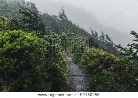 Image of a wet foggy forest trail.