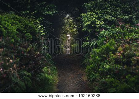 Image of a forest trail under arched trees.