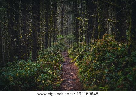 Image of a lush trail in a forest.