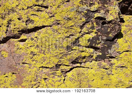 Rock Cracked and Textured with Yellow Lichen