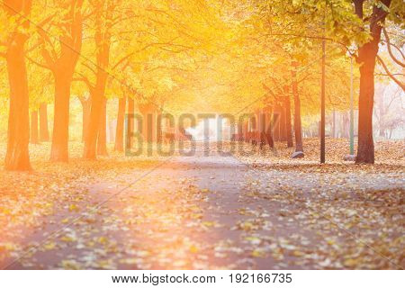 View of walkway and autumn trees in park