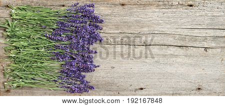 Lavender flowers on wooden background. Bouquet of fresh blossoms