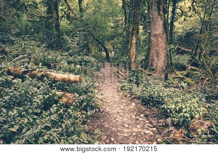 Footpath in tropical evergreen forest. Vintage photo.