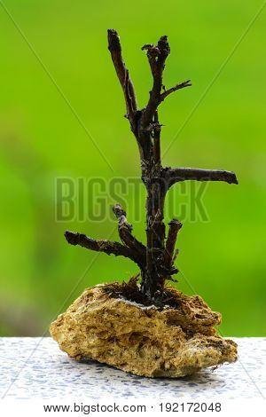 Homemade sculpture from a branch with a base of stone