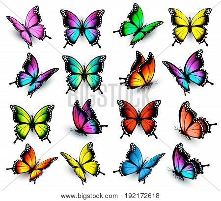 Big set of Colorful butterflies. Vector illustration.