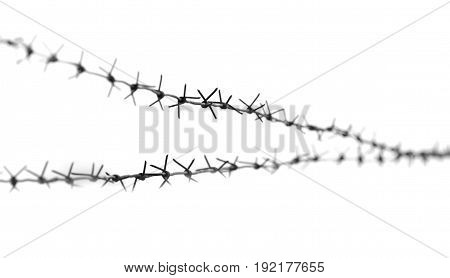 barbed wire on a white background . A photo