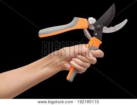 secateurs in hand on a white background